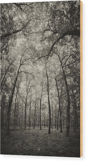 The Hands Of Nature Wood Print