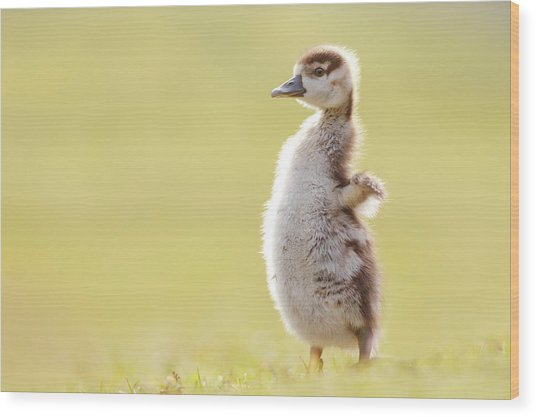 The Happy Chick - Happy Easter Wood Print