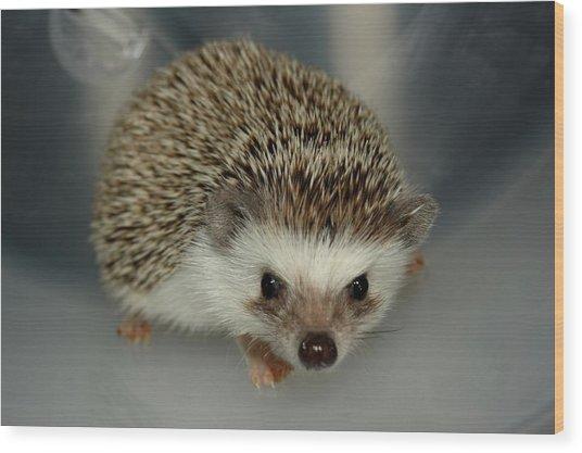 The Hedgehog Wood Print