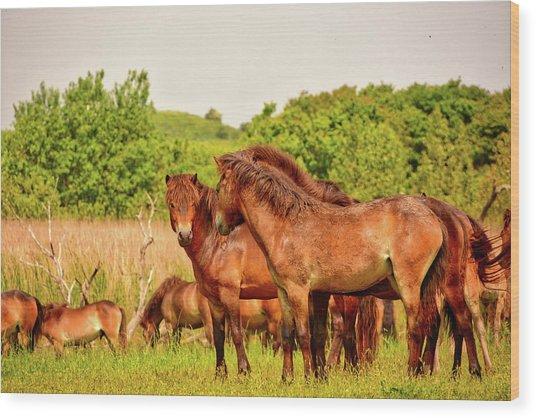 The Herd 2 Wood Print