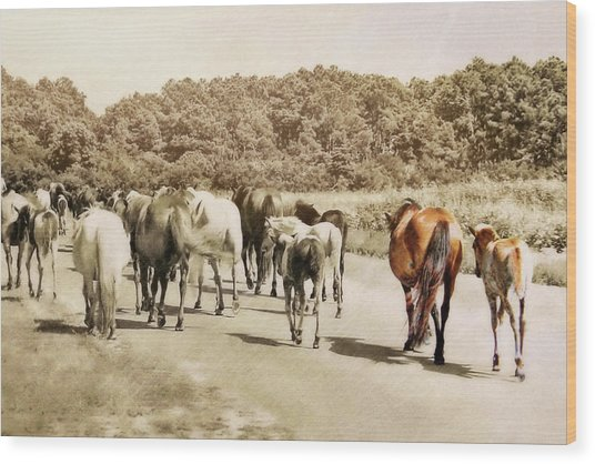 The Herd Wood Print by JAMART Photography