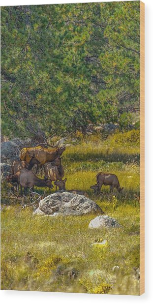 The Herd Keeper Wood Print
