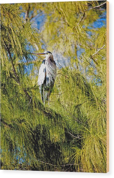 The Heron's Whiskers Wood Print