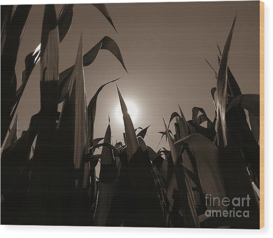 The Hiding Sun - Sepia Wood Print