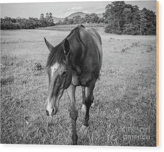 the Horses of Blue Ridge 3 Wood Print