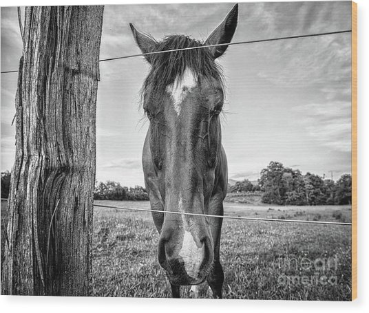 the Horses of Blue Ridge 4 Wood Print