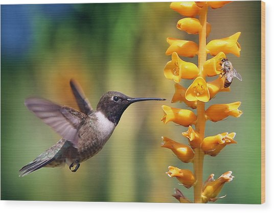 The Hummingbird And The Bee Wood Print