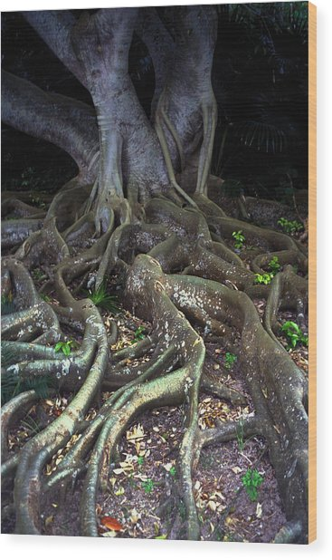 The Hungry Roots Wood Print