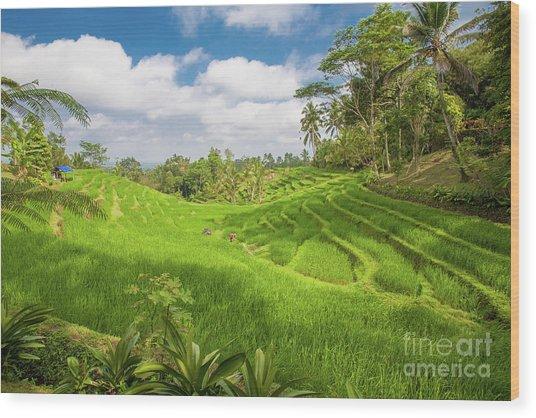 The Island Of God #14 Wood Print