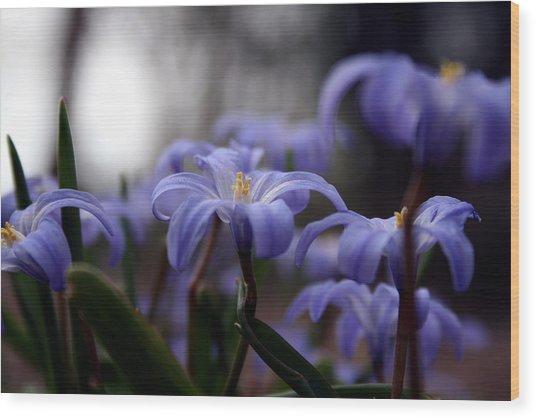 The Joy Of Springtime Wood Print
