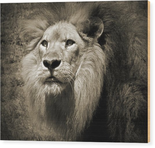 The King II Wood Print