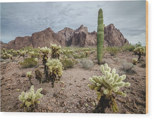 The King Of Arizona National Wildlife Refuge Wood Print