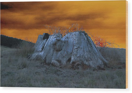 The Last Of The Giant Eucalyptus Viminalis In Wilmot Tasmania Wood Print by Sarah King