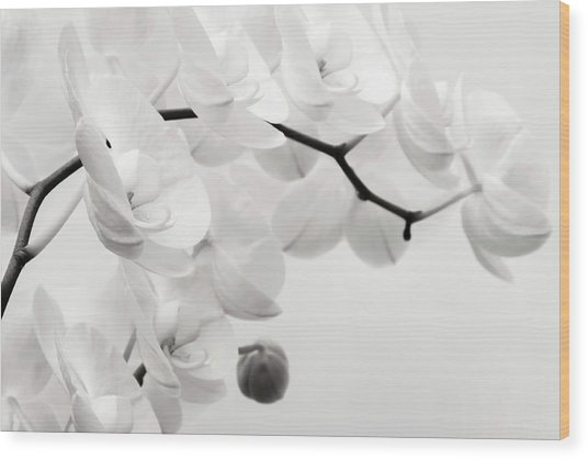 The Last Orchid Wood Print