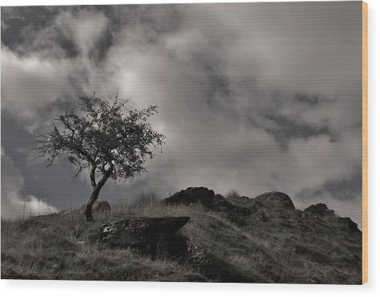 The Last Tree Wood Print by Sean Wareing