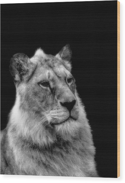 The Lioness Sitting Proud Wood Print