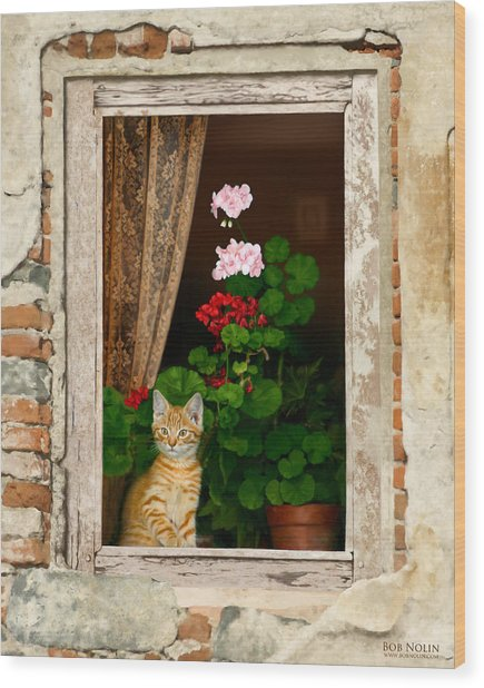 Wood Print featuring the digital art The Little Tuscan Tiger by Bob Nolin