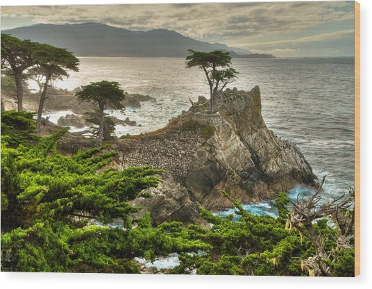 The Lone Cypress Carmel California Wood Print