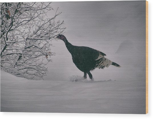The Lone Turkey Wood Print