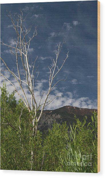 The Lonely Aspen  Wood Print