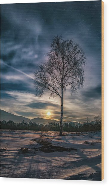 The Lonely Birch Wood Print
