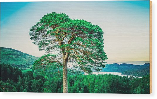The Loner Wood Print