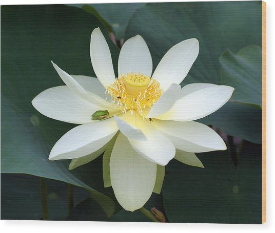 The Lotus Flower The Frog And The Bee Wood Print