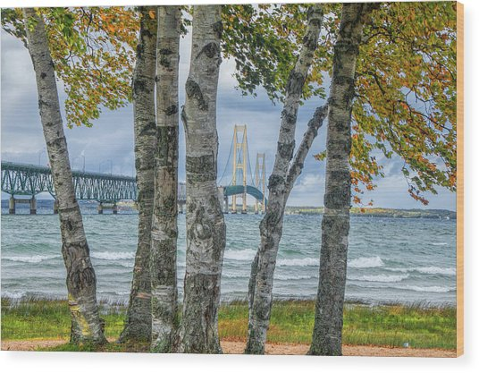 The Mackinaw Bridge By The Straits Of Mackinac In Autumn With Birch Trees Wood Print