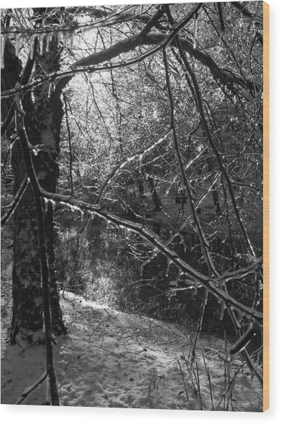 The Magic Pond Wood Print by Garth Glazier