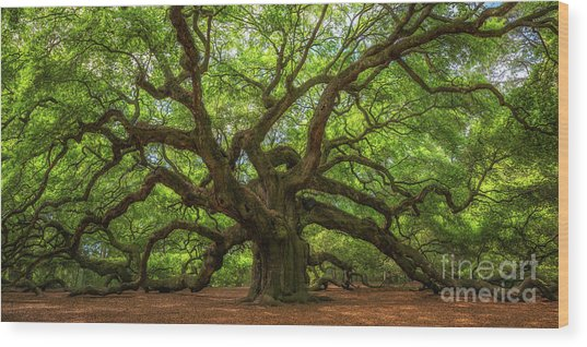 The Magical Angel Oak Tree Panorama  Wood Print