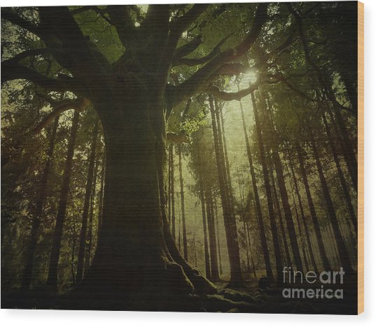 The Magical Beech Wood Print