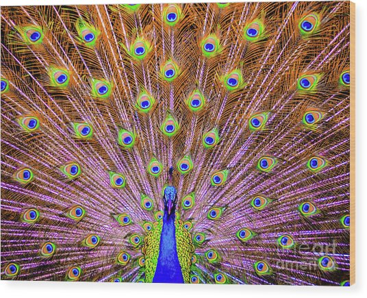 Wood Print featuring the photograph The Majestic Peacock by D Davila