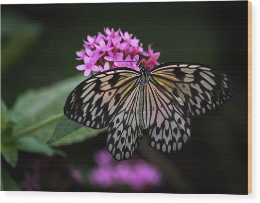 Wood Print featuring the photograph The Master Calls A Butterfly by Cindy Lark Hartman