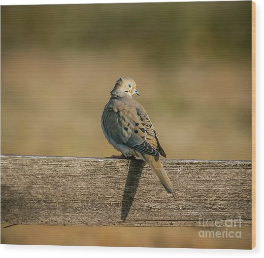 The Morning Dove Wood Print