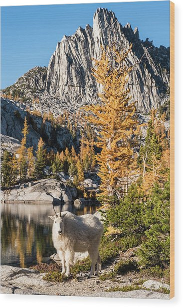 The Mountain Goat In The Enchantments Wood Print
