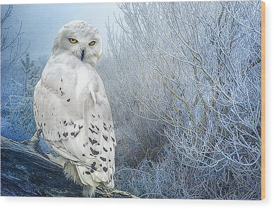 The Mystical Snowy Owl Wood Print