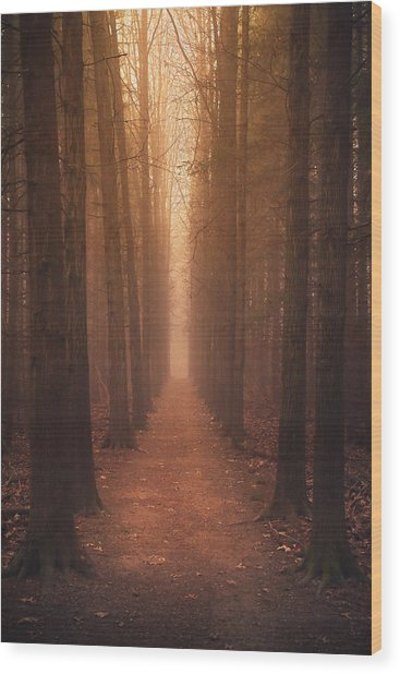 The Narrow Path Wood Print