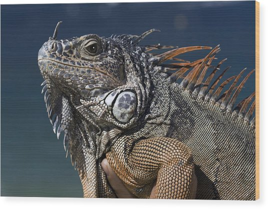 The Night Of The Iguana Wood Print by Carl Purcell