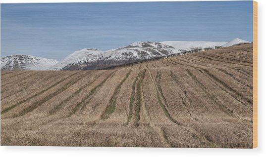 The Ochil Hills In Clackmannanshire Wood Print