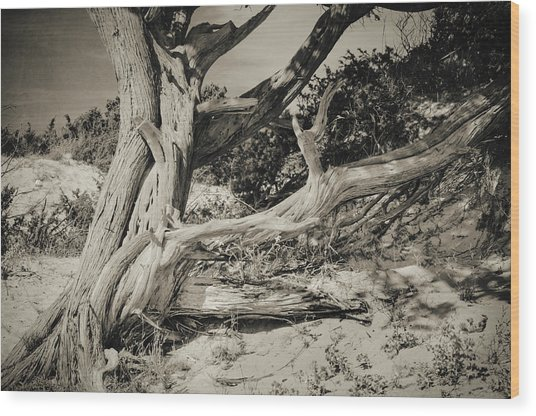 The Old Man Wood Print