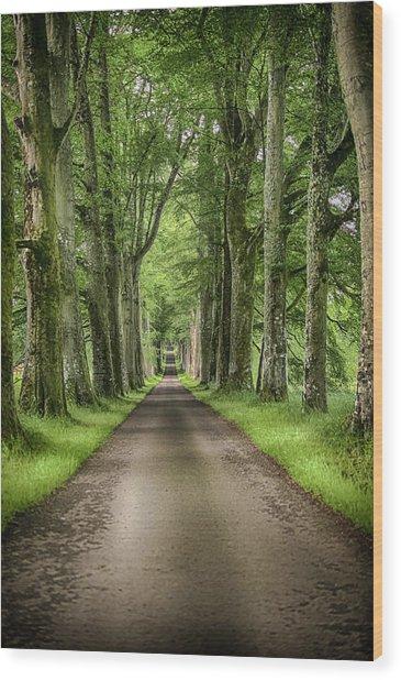 The Old Oak Trees Wood Print