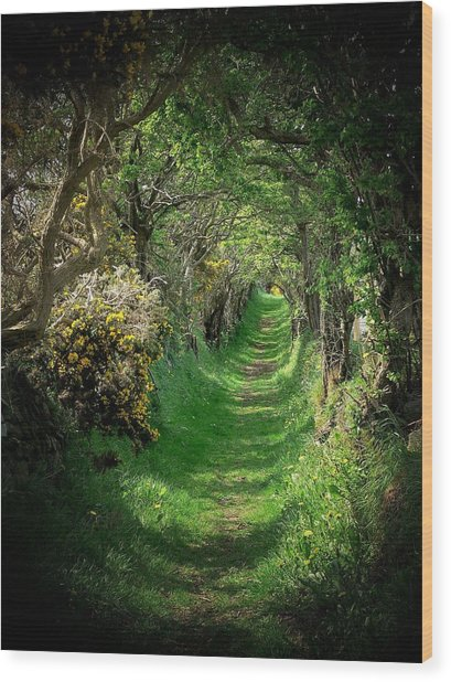 The Old Road Wood Print by Cat Shatwell