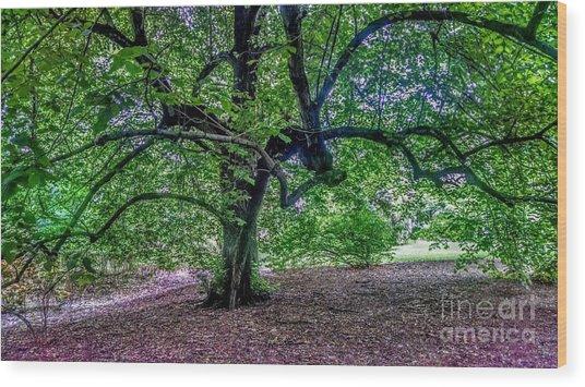 The Old Tree At Frelinghuysen Arboretum Wood Print