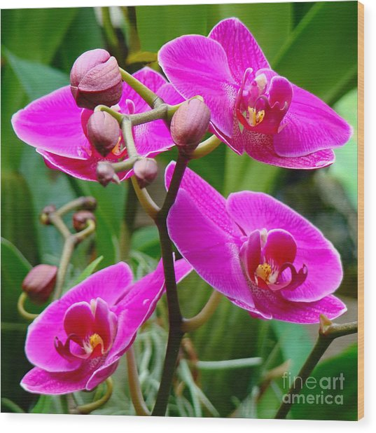 The Orchid Dance Wood Print