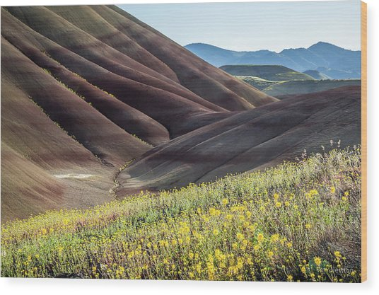 The Painted Hills In Bloom Wood Print