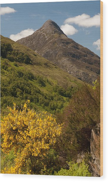 The Pap Of Glencoe Wood Print