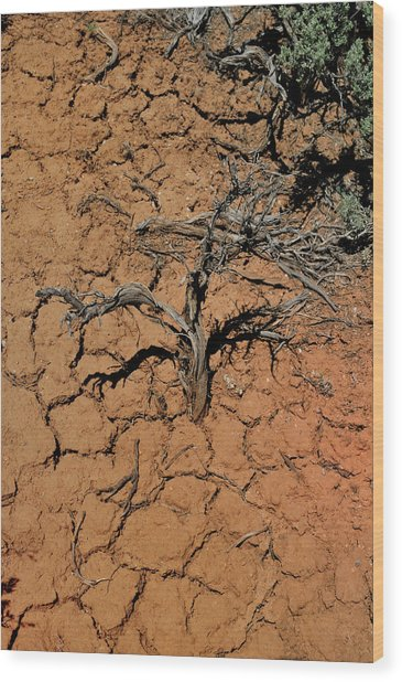 The Parched Earth Wood Print