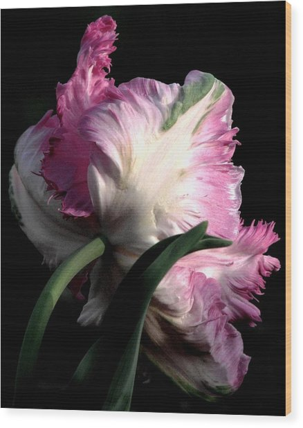 The Parrot Tulip Queen Of Spring Wood Print