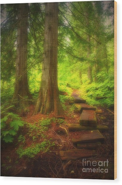 The Path Through The Forest Wood Print