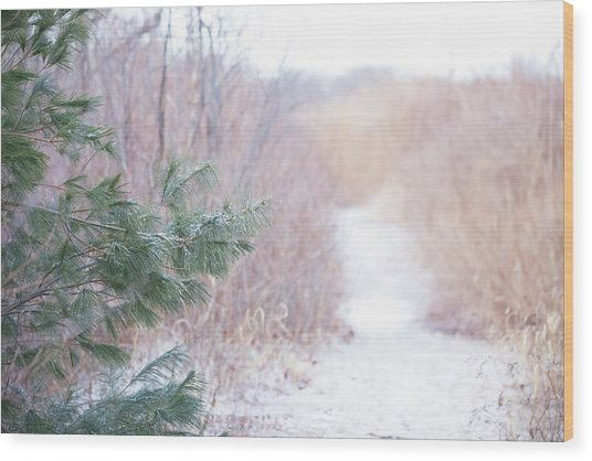 The Path Untraveled  Wood Print